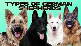 German Shepherd Types  5 Types of German Shepherds