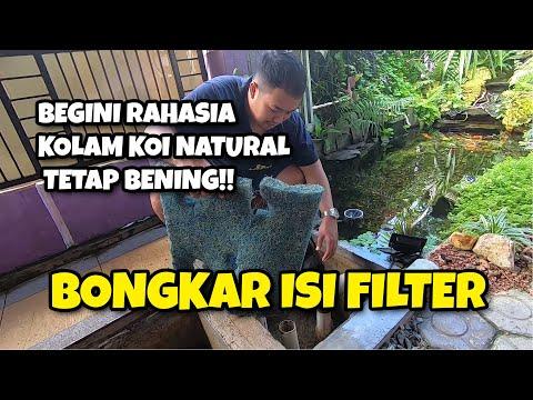 begini-rahasia-kolam-koi-natural-tetap-bening-!!-(review-isi-chamber-filter)
