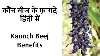 Kaunch Beej Benefits | कौंच बीज के फ़ायदे हिंदी में