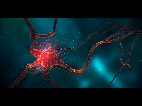 Human Brain And Quantum Physics ( Science...