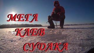 Ловля судака на тюльку зимой. Fishing for walleye on live bait in winter