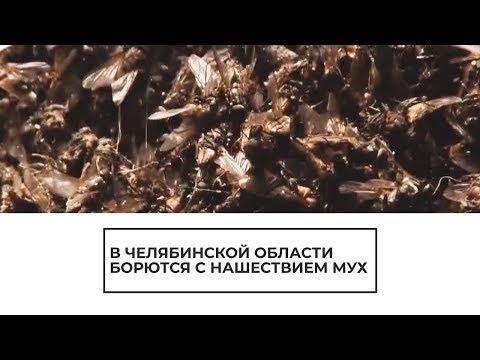 В Челябинской области борются с нашествием мух