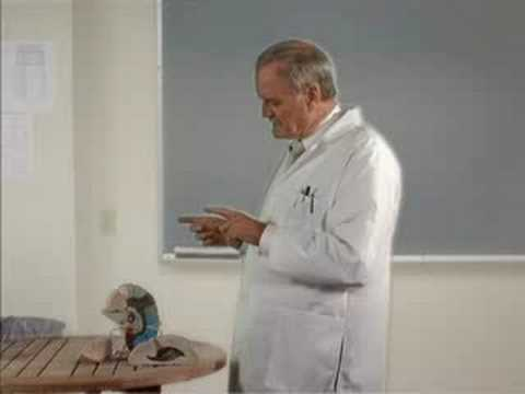 The Brain as explained by John Cleese