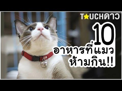 10 อาหารที่ห้ามให้แมวกินเด็ดขาด !!