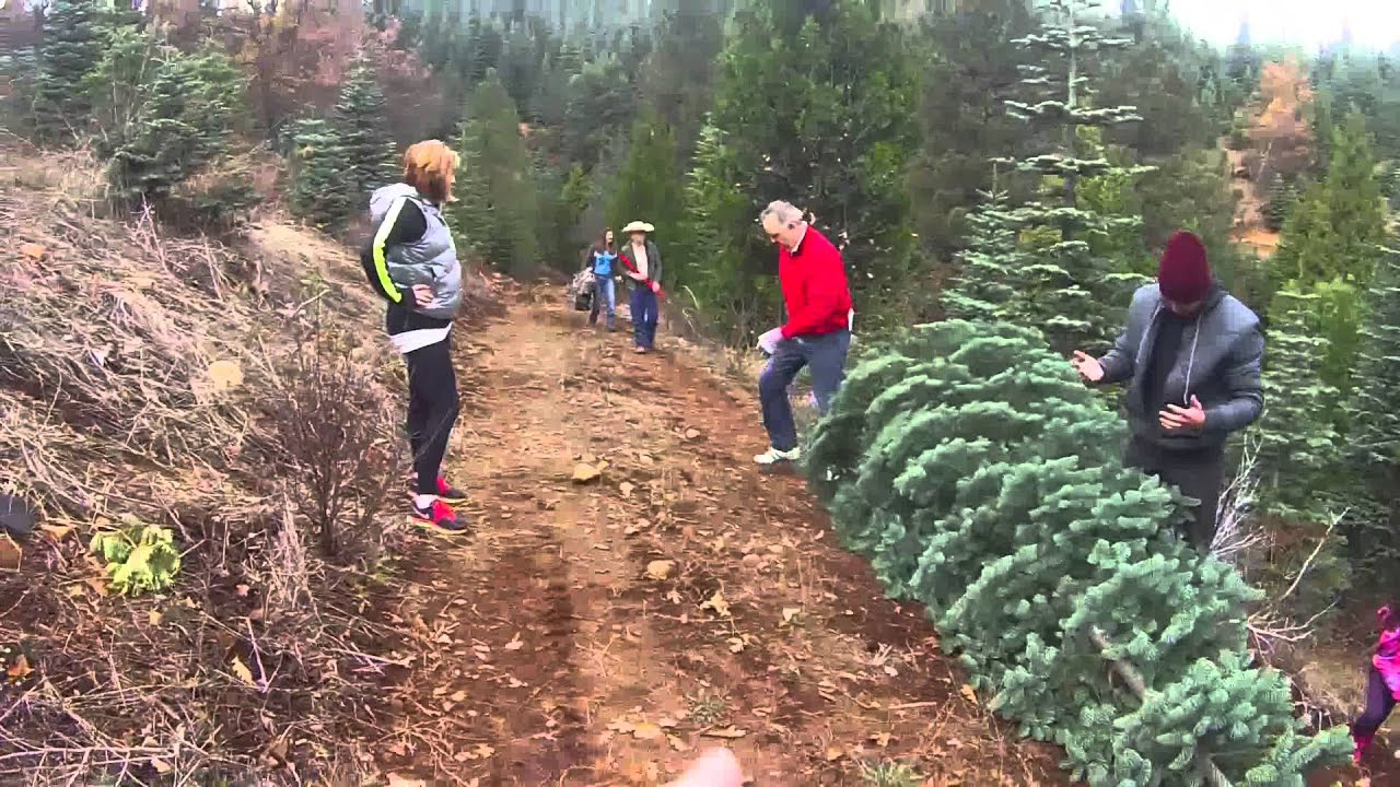 Snowy Peaks Christmas Tree Farm Youtube