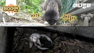 10미터 아래로 추락한 새끼를 구하지 못하는 어미 고양…