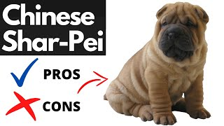 Chinese SHARPEI Pros And Cons | The Good AND The Bad!!
