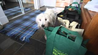 Will Irwin The Westie Approve The Groceries?