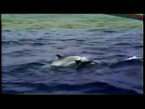 Captain John Whale Watch 1989