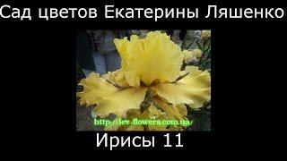 #Ирисы11 #Сад цветов Екатерины Ляшенко
