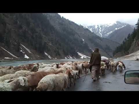 Kunhar River    Naran    Rain    Pakistan 💖💖💖