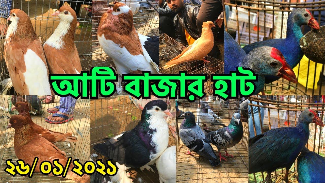 হাটে ভালো মানের কবুতরের অভাব   পাখি ও কবুতরের দাম জানুন    Atibazar Pet Market, Keraniganj (V - 221)
