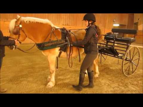 hook up pony cart harness