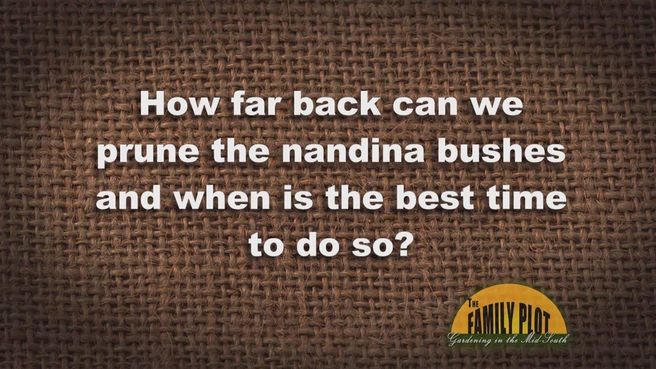 QA Pruning Nandina Bushes  YouTube