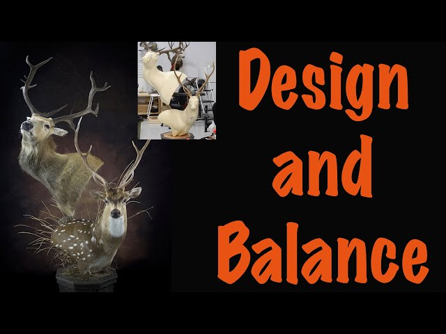 Pere David Deer, Part 2 of 5... How to Balance them on the pedestal. Art of Taxidermy
