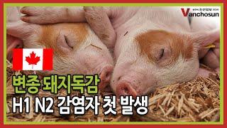 [밴조선영상뉴스] 인플루엔자 A형 (H1 N2) 감염자…