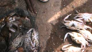 Repeat youtube video Fishing Crab, Cuttle fish etc at Valiyathura Pier