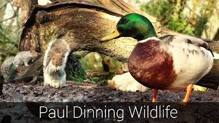 Videos For Cats and Dogs To Watch - Ducks and Squirrels in The Mud