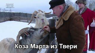 Коза Марта из Твери