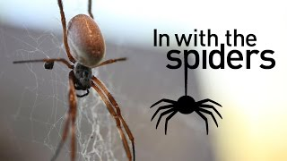 Get 'In With the Spiders' at ZSL London Zoo.