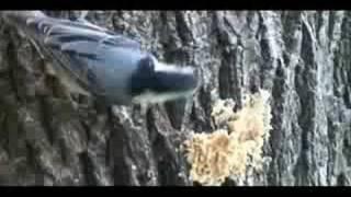 Jim's Birdacious Bark Butter