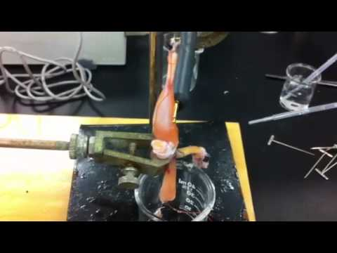 Frog muscle lab report