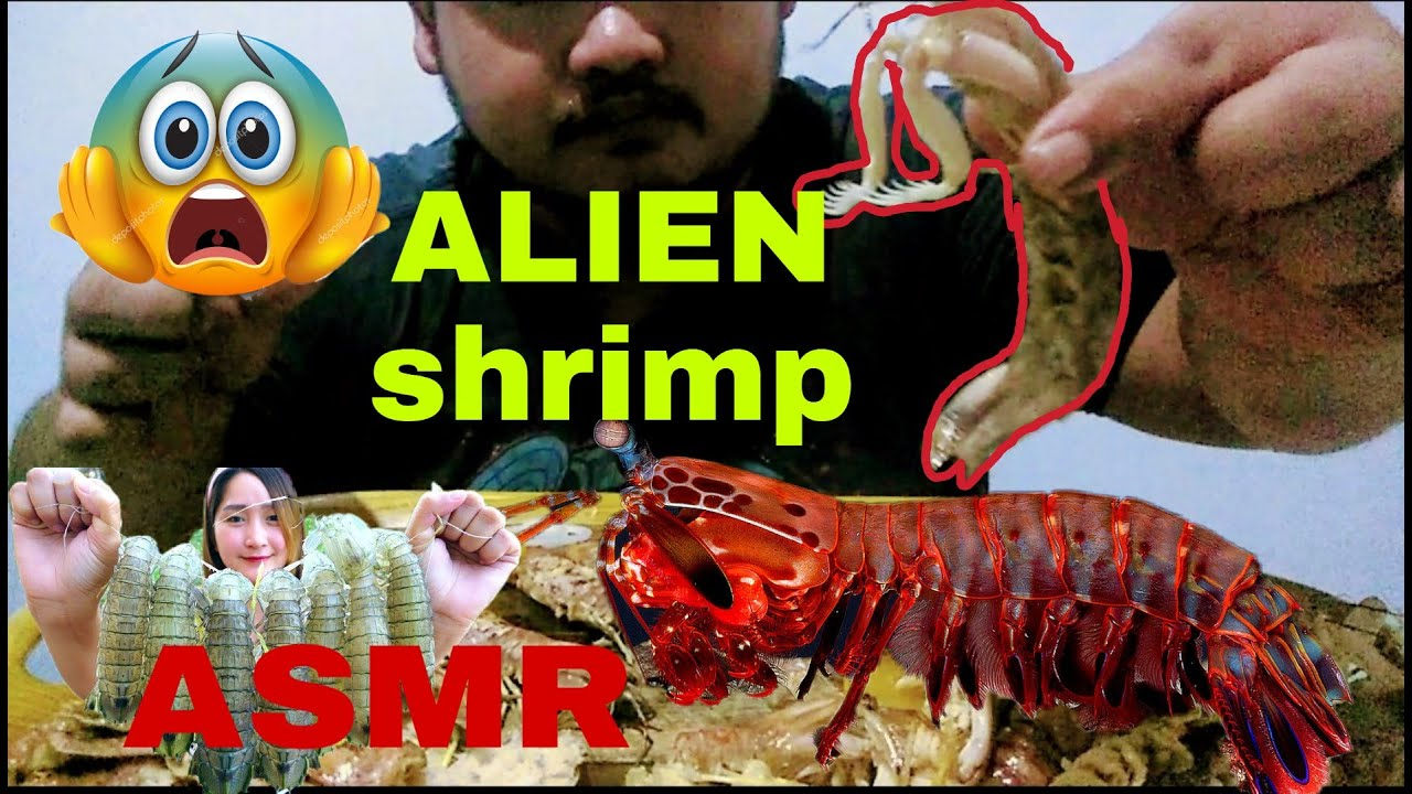 Download Alupihang Dagat ALIEN SHRIMP MUKBANG   Mantis shrimp, Pickled Radish   Brandon EATS Mukbang PH 5