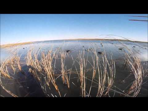 Walpole 2014 Video