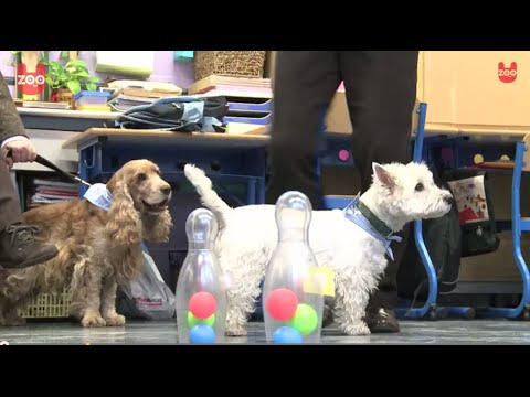 Dogs Help Children with Learning Disabilities