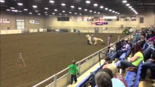 Alg Major Flit Bar @ The Classic Futurity
