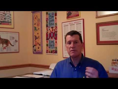 Canine Cryptorchidism Explained By Doc Pawsitive