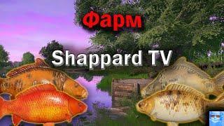 Русская рыбалка 4 Карп фишинг НАЖИВКИ И БЛЕСНА