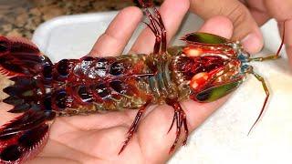 eating-giant-alien-mantis-shrimp-for-dinner-catch-clean-cook
