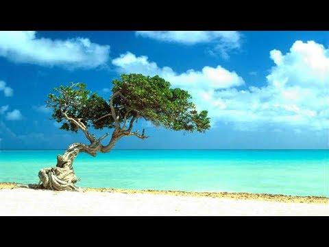 Best Aruba All inclusive resorts 2018: YOUR Top 10 all inclusive Aruba