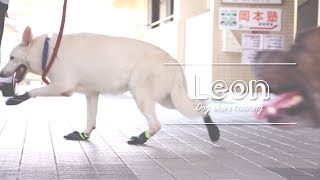 11CLIPは、愛犬動画を通じて、愛犬と家族の幸せな時間を、永久に残しま...