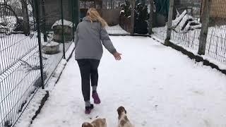 Питомник Эпаньол Бретонов Вольный Ветер - условия содержания собак