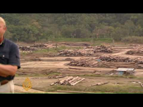 Corruption linked to Borneo deforestation - 15 Jul 09