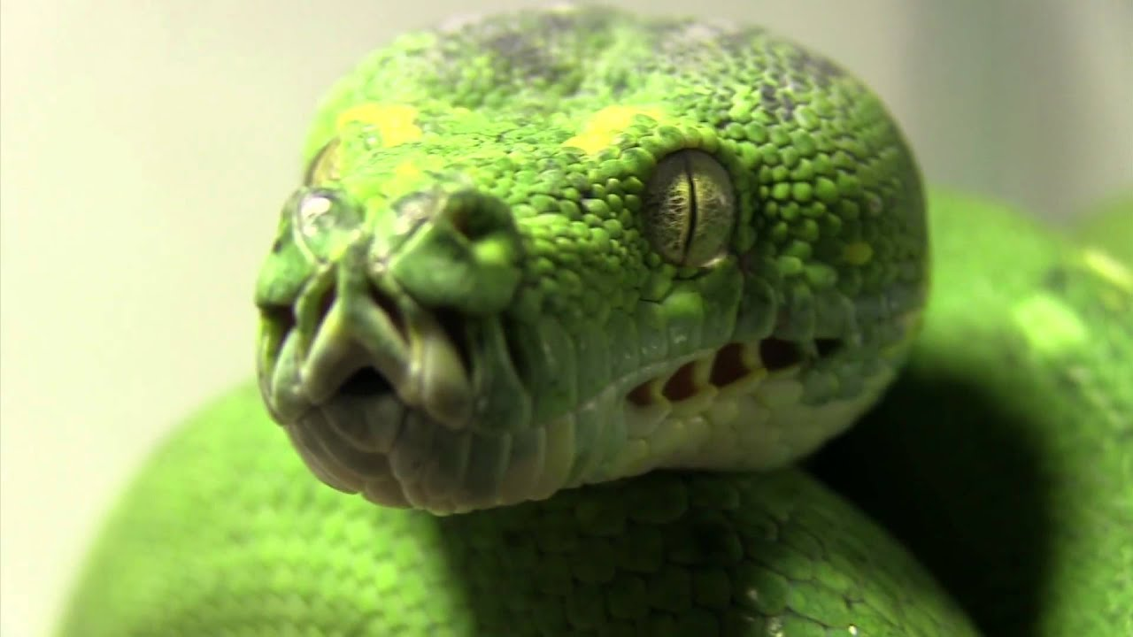 Green Anaconda Attack