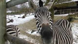 この動物園ではペレットを売っていて色んな動物に餌をあげられます。 ス...