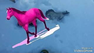 Фотосессия с лошадьми 🐴  видео для тех кто любит лошадей 😻........
