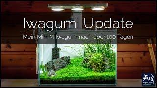 IWAGUMI MINI M UPDATE | So sieht das Becken nach über 100 Tagen aus | AquaOwner