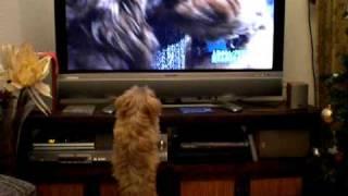 TVが大好きな左介。正確に言うと、TVに映し出される動物が大好き。 芸能...