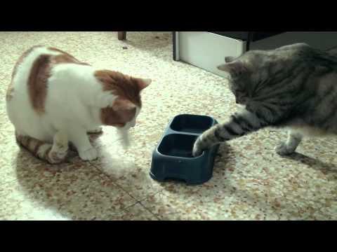 Gatti che mangiano con la zampina gatti divertenti youtube for Youtube cani e gatti