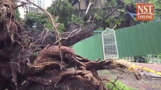Storm triggers flash floods, topples trees in George Town