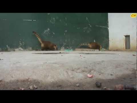 Parc animalier de Brabtia El Tarf (El kala) racon