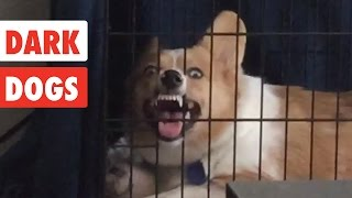 Dark Dogs | Funny Dog Video Compilation 2017
