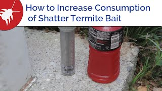 How to Increase Consumption of Shatter Termite Bait