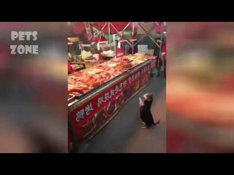 Cats  dogs lover funny moments pet zone