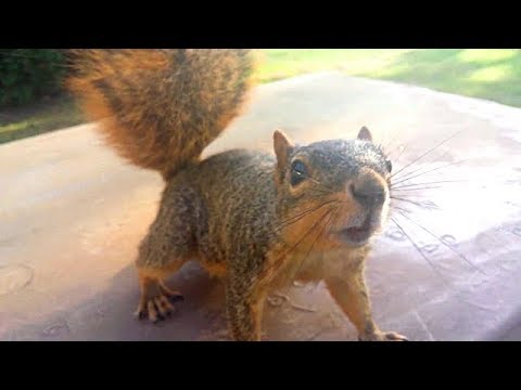 Training Squirrels / Hand feeding Squirrels