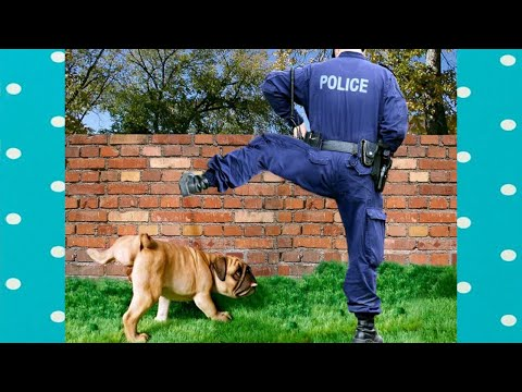 What a smart dogs! Dog Peeing and Cleaning Like Human | FUNNY Video Compilation